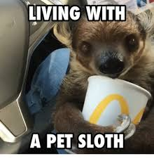 Angry Sloth Meme - 25 best memes about sloth sloth memes