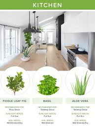 best house plants the best houseplants for every room proflowers