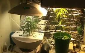Grow Room Lights Grow Cannabis Drug Art Part 3