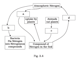 class 8 important questions for science u2013 microorganisms friend