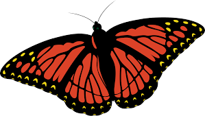 monarch butterfly pictures the largest free clipart clipartbarn
