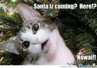 Grumpy Cat Memes Christmas - luxury christmas cat meme grumpy cat christmas meme 008 christmas
