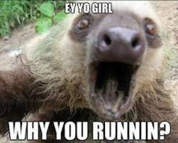 Sloth Meme Images - ey yo girl why you runnin sloth meme picture golfian com