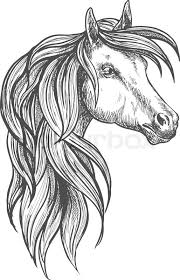 cavalry war horse of morgan breed icon in sketch style for horse