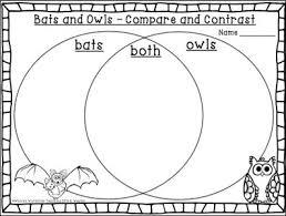 89 best spiders bats owls images on pinterest bats color by