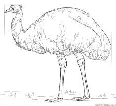 draw emu bird step step drawing tutorials