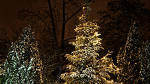 file glowing christmas tree lights in the winter night jpg