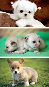 uber cute boy wallpapers cute baby pet pictures puppy u0026 animals wallpapers apps 148apps