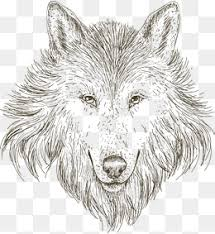 wolf head png images vectors and psd files free download on