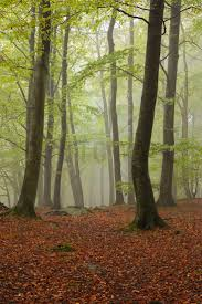 218 best wall murals images on pinterest wall mural photo stream in swedish beech forest ii wall mural photo wallpaper photowall