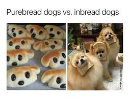 Dog Text By Memeemma Meme - 4334 best funny stuff images on pinterest ha ha funny stuff and