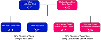 Most Common Type Of Color Blindness Inherited Colour Vision Deficiency U2014 Colour Blind Awareness