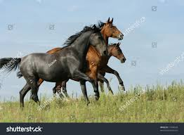 mustang horse running three horses running stock photo 17734549 shutterstock
