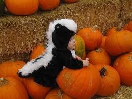 Baby Skunk Costume Halloween 33 Skunks Cute Images Skunks Baby