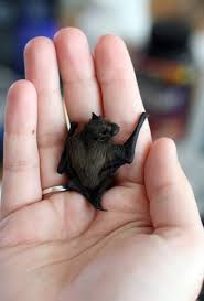 small bat some bats are big and some bats are small ms soltau s class