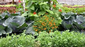 Vegetable Garden Layout Guide A Basic Vegetable Garden Layout And Planning Guide Https