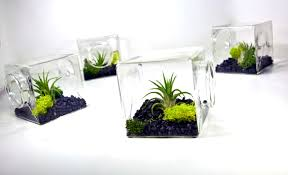 air plant eco glass cube modern air plant terrarium cube