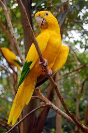 the 3158 best images about bird u0027s eye view on pinterest