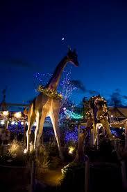 denver zoo lights hours denver zoo s zoo lights shines bright mile high mamas