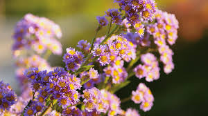 Fall Flowers For Weddings In Season - top fall blooming flowers for your garden