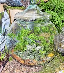 master gardener terrariums make a unique gift with big payoff