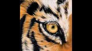 eye of the tiger survivor