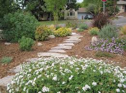 drought tolerant backyard designs best landscape design ideas on