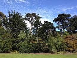 native san francisco plants ca u2013 san francisco botanical garden