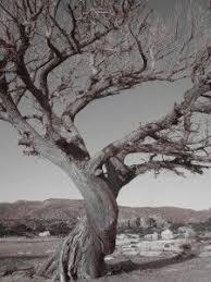 tree roots trees trees photos and photo tree