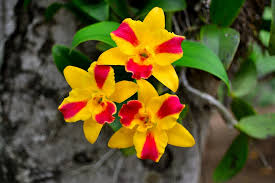yellow orchids orchids yellow flowers are free photo on pixabay