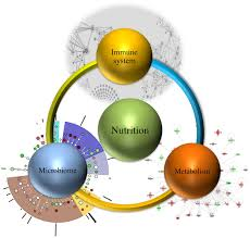 frontiers modeling enabled systems nutritional immunology
