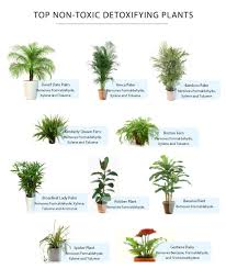 philodendron house plants toxic to cats