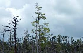 North Carolina forest images Forest health experts eye hurricane damage in north carolina 39 s jpg