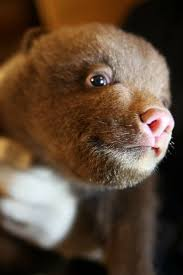 222 best itty bitty baby animals images on pinterest bitty baby
