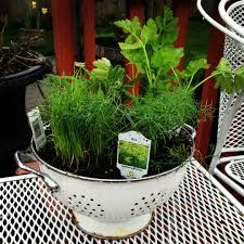 plant herbs in a colander and set out on the deck i love how you