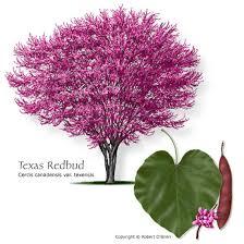 Fall Garden North Texas - texas tree selector