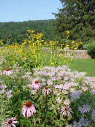 native plants in landscape management native grass and wildflower seeding q u0026 a with the experts