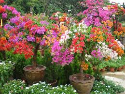 what is a flowering plant world of flowering plants