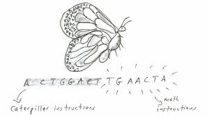 German Butterfly Meme - are butterflies two different animals in one the death and