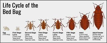 Kill Bed Bugs How To Detect Resolve And Prevent Problems With A Bed Bug