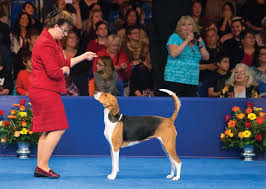 best 25 national show ideas on akc shows
