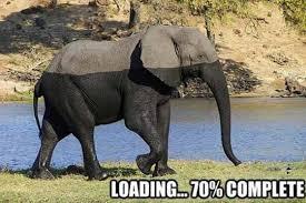 Elephant Meme - 13 hilarious elephant memes i can has cheezburger