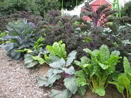 Vegetable Garden Blogs by Tower Hill Botanic Garden Uconnladybug U0027s Blog