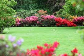 beautiful garden with flowering shrubs a neat manicured lawn