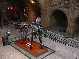 january 2009 sauropod vertebra picture of the week