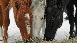 Us Department Of The Interior Bureau Of Land Management Bureau Of Land Management We Won U0027t Euthanize 45 000 Wild Horses
