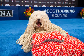 the national show and dogthanking with purina a thanksgiving