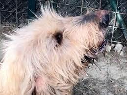cani in cerca di casa tanti cani in cerca di casa cercocuccia vi offre un cucciolo per