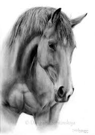 best 25 horse drawings ideas on pinterest horse drawing