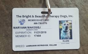 Comfort Dogs Certification Career Change U0027 Pup Leads Way To Gold Award For Clark Scout
